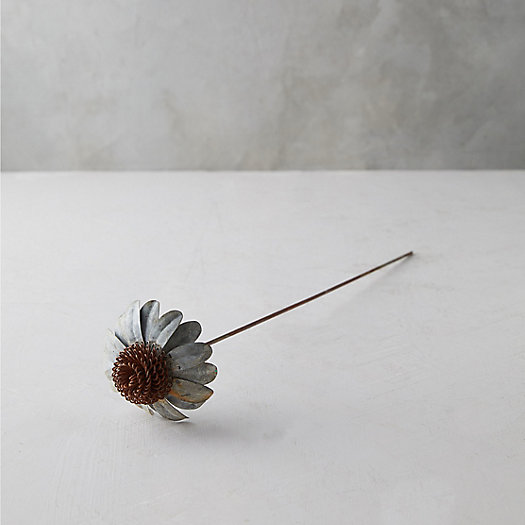 View larger image of Iron Cone Flower Stem