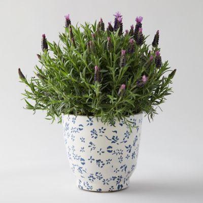 Blue Vine Pot