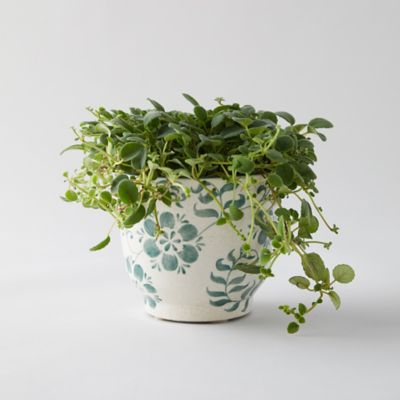 Floral Fern Pot