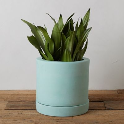 Pastel Terracotta Pot + Saucer