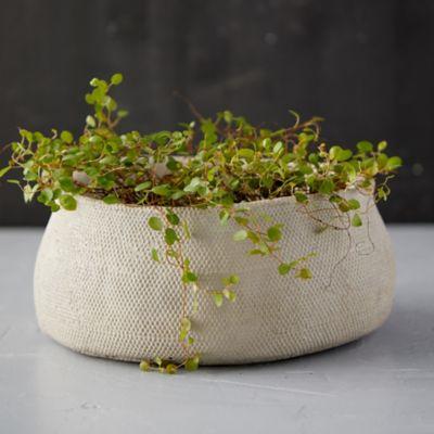 Freeform Concrete Bowl Planter
