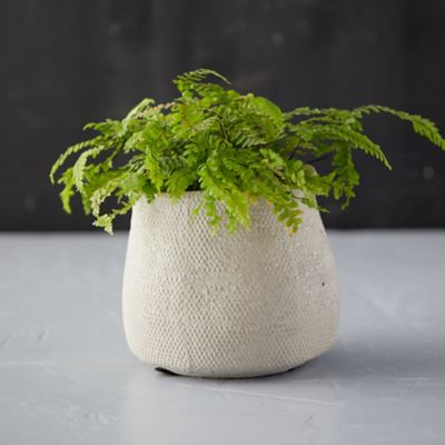 Freeform Concrete Pot