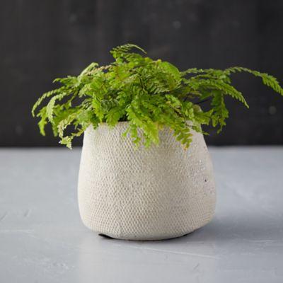 Freeform Concrete Pot