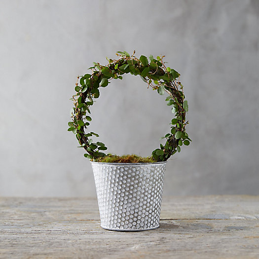 View larger image of Angel Vine Topiary, Dot Pot