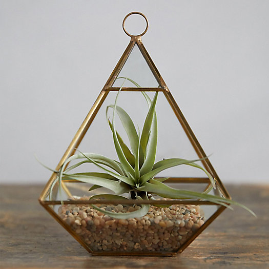 View larger image of Planted Tillandsia Geo Terrarium