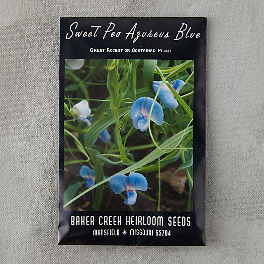View larger image of Azure Blue Sweet Pea Seeds
