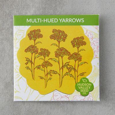 Multi-Hued Yarrow Seeds