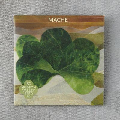 Mache Greens Seeds