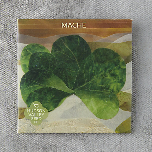 View larger image of Mache Greens Seeds