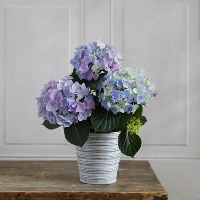 Blue + Purple Hydrangea, Ribbed Metal Pot