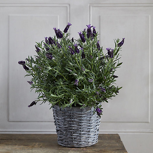 View larger image of Lavender, Woven Metal Pot