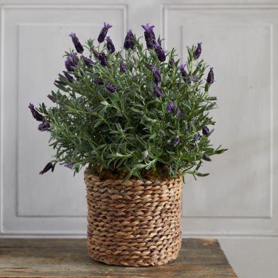 Lavender, Woven Basket