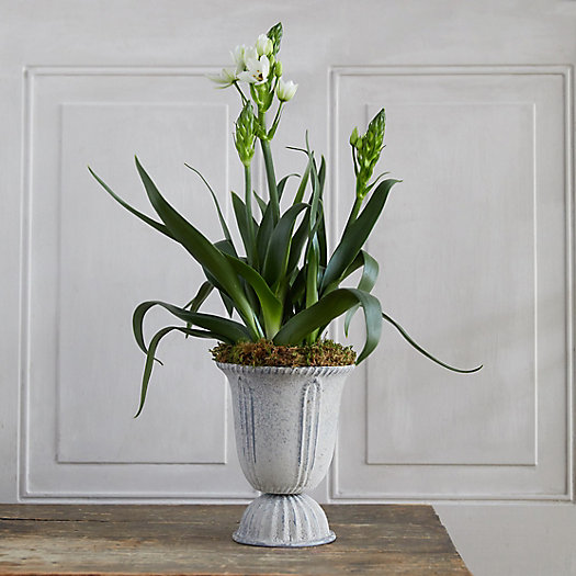 View larger image of Star of Bethlehem, Tall Metal Urn