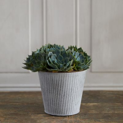 Hens + Chicks, Ribbed Metal Pot