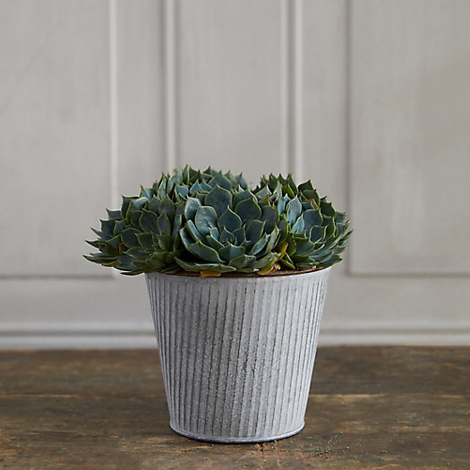 View larger image of Echeveria, Ribbed Metal Pot