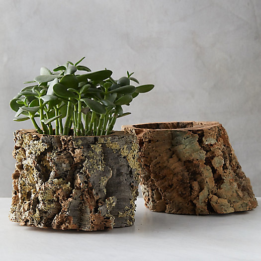View larger image of Cork Planter