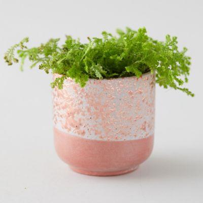 Bronzed Ceramic Pot