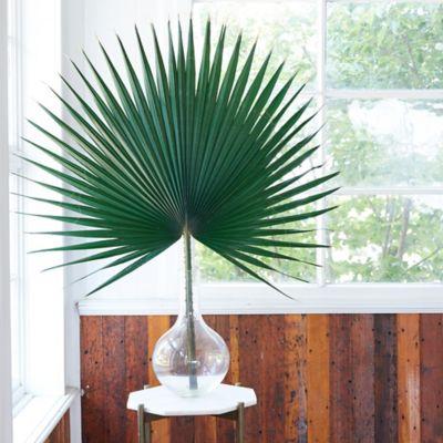 Preserved Washingtonia Palm Frond