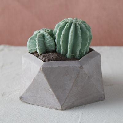 Chocolate Cactus
