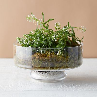 Low Round Bowl Terrarium
