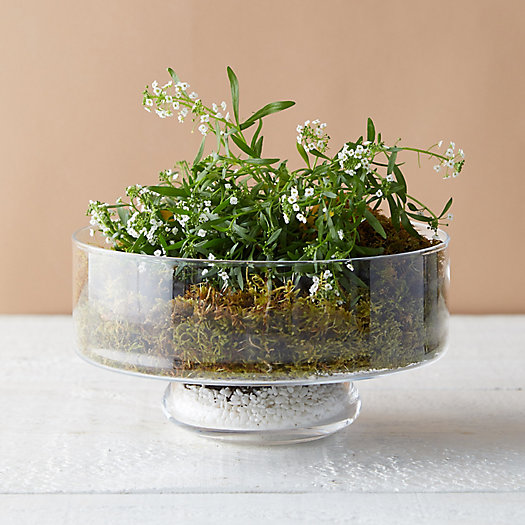 View larger image of Low Round Bowl Terrarium