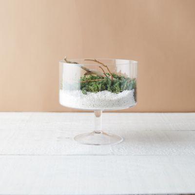Trifle Bowl Terrarium