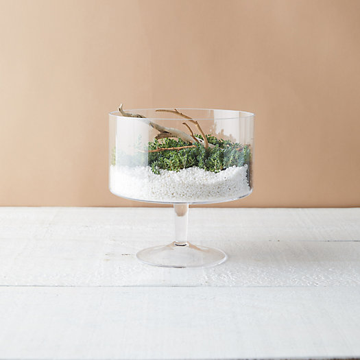 View larger image of Trifle Bowl Terrarium