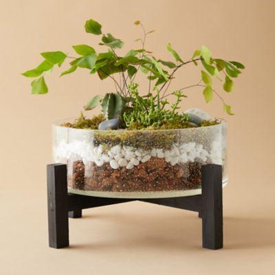 Bowl Terrarium, Wood Stand