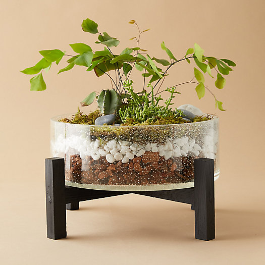 View larger image of Bowl Terrarium, Wood Stand