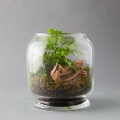Footed Jar Terrarium