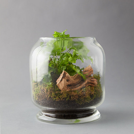 View larger image of Footed Jar Terrarium
