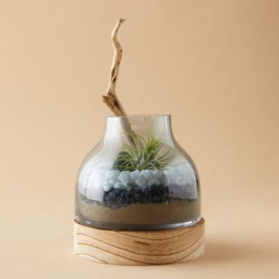 Vase Terrarium, Wood Base
