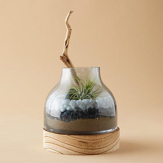 View larger image of Vase Terrarium, Wood Base