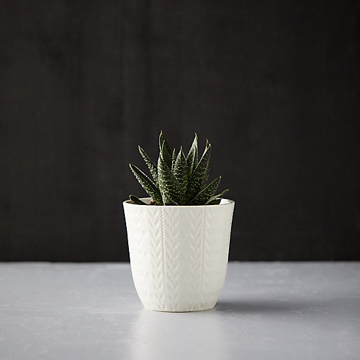 View larger image of Textured Botanical Pot