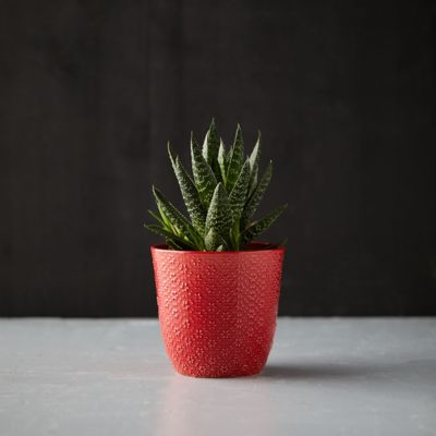 Textured Botanical Pot