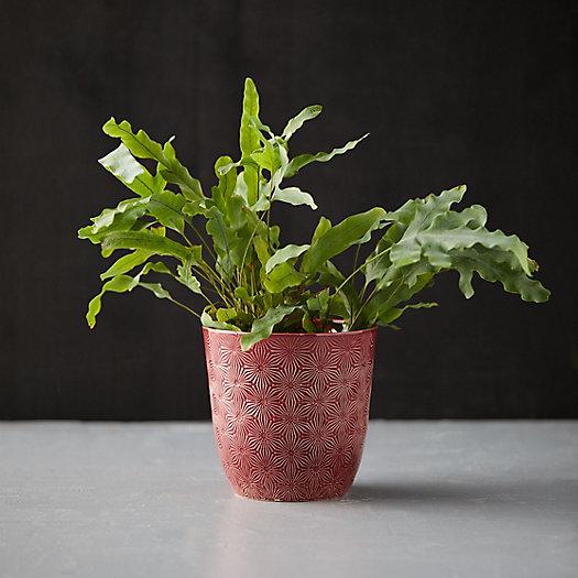 View larger image of Textured Botanical Pot