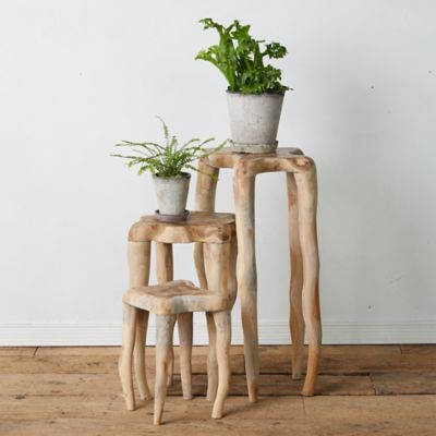 Teak Root Plant Stand