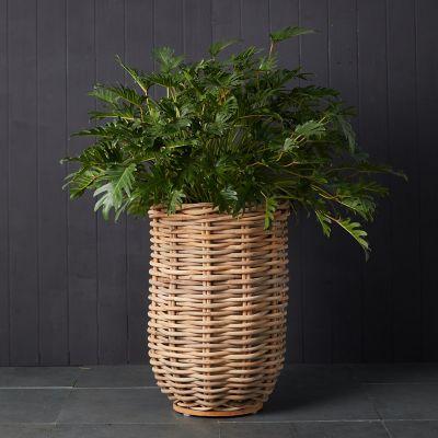 Rattan Cylinder Basket Planter