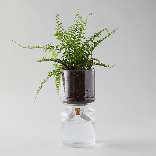 View larger image of Self-Watering Glass Planter