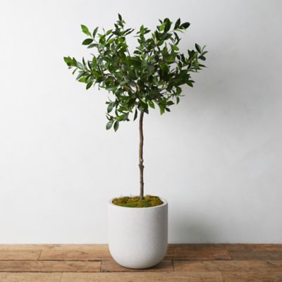 Faux Laurel Tree
