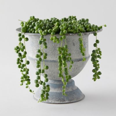 String of Pearls, Metal Urn
