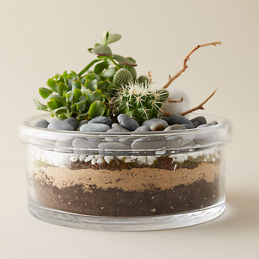 View larger image of Folded Top Low Bowl Terrarium
