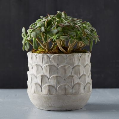 Feather Cement Planter