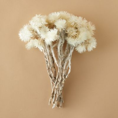 Dried Everlasting Flower Bunch