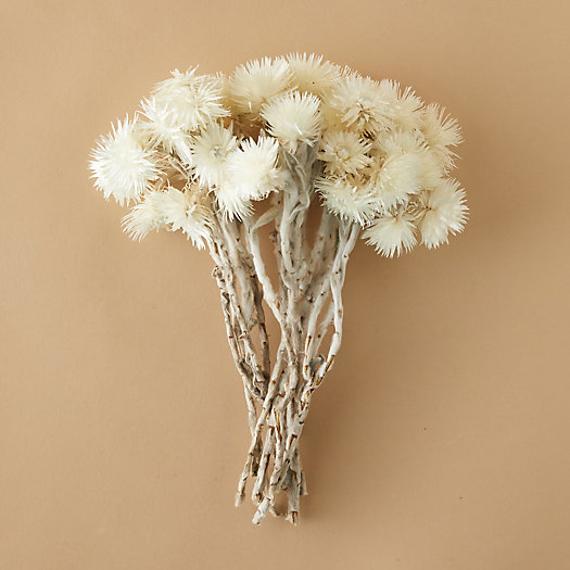 View larger image of Dried Everlasting Flower Bunch