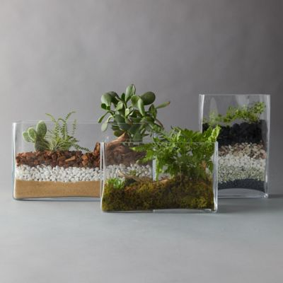 High Side Rectangle Terrarium
