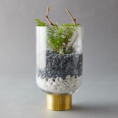 Vase Terrarium, Brass Collar