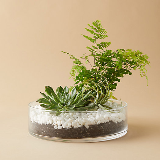 View larger image of Low Straight Side Bowl Terrarium