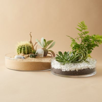 Low Straight Side Bowl Terrarium