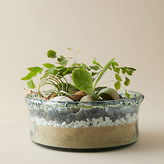 View larger image of High Side Bowl Terrarium